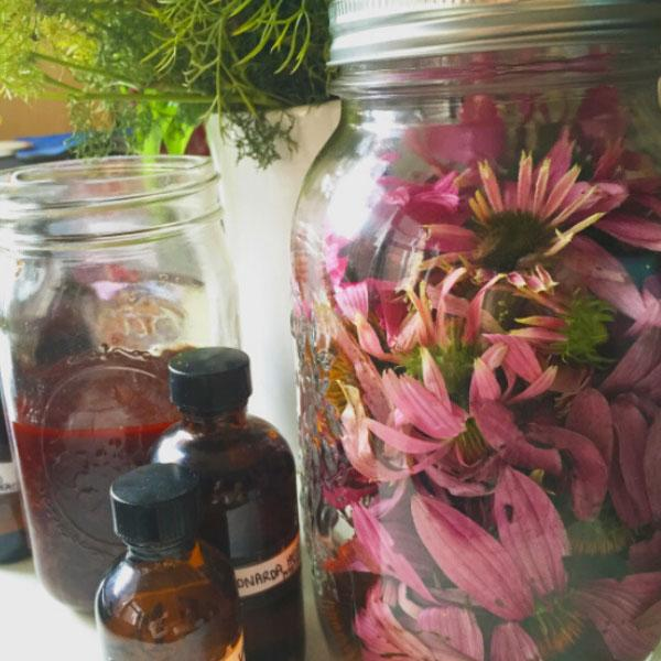 Herbal Allies For Winter Immunity