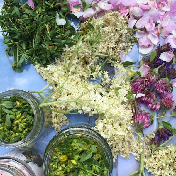 Herbal Stressbusters For City Living